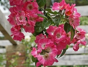 9th Jul 2020 - in the rose garden