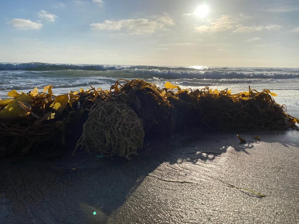 Seaweed by msfyste