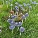 The fungus among us!