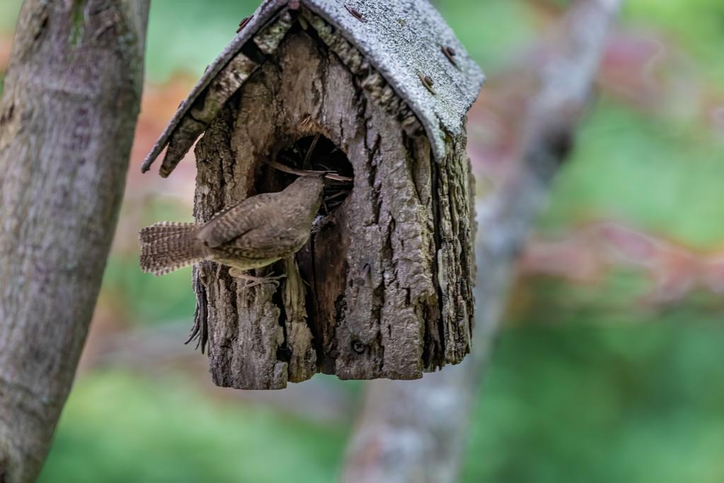 Nest Building by jyokota