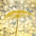 glittering sunlight,.... by jerome