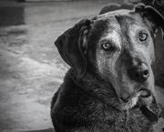 10th Jul 2020 - Dog days of summer
