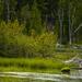 Mallard Family At Little Three Creeks Lake