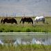 Typical Western Montana Summer Scene
