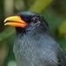 Peruvian Amazon Bird