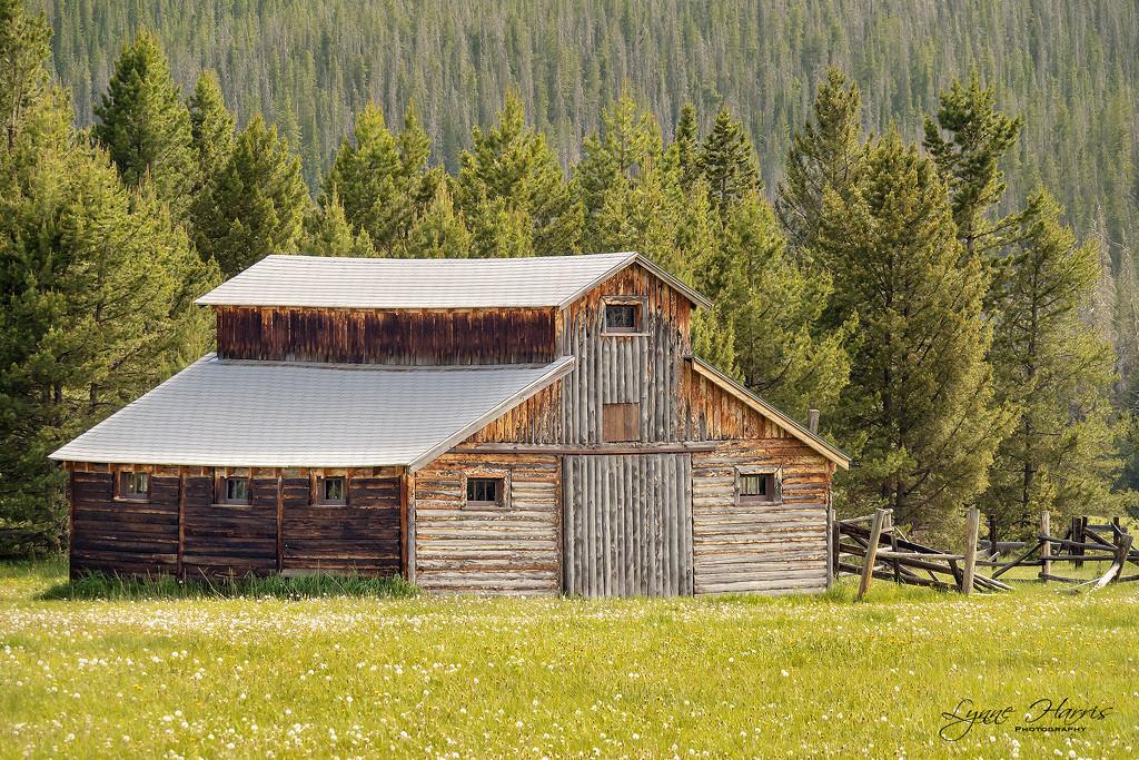 Old Barn by lynne5477