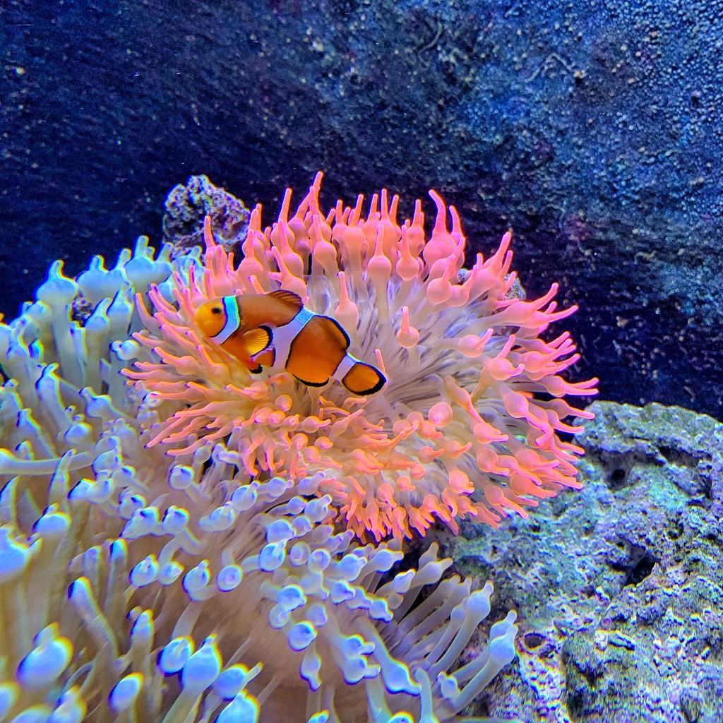 Nemo.  by cocobella