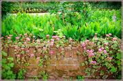 12th Jul 2020 - in the garden