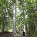 100 Acre Wood