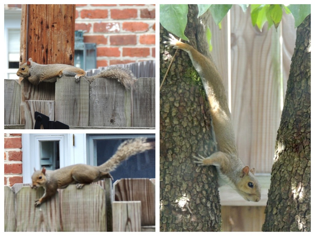 Squirrel Insouciance by allie912