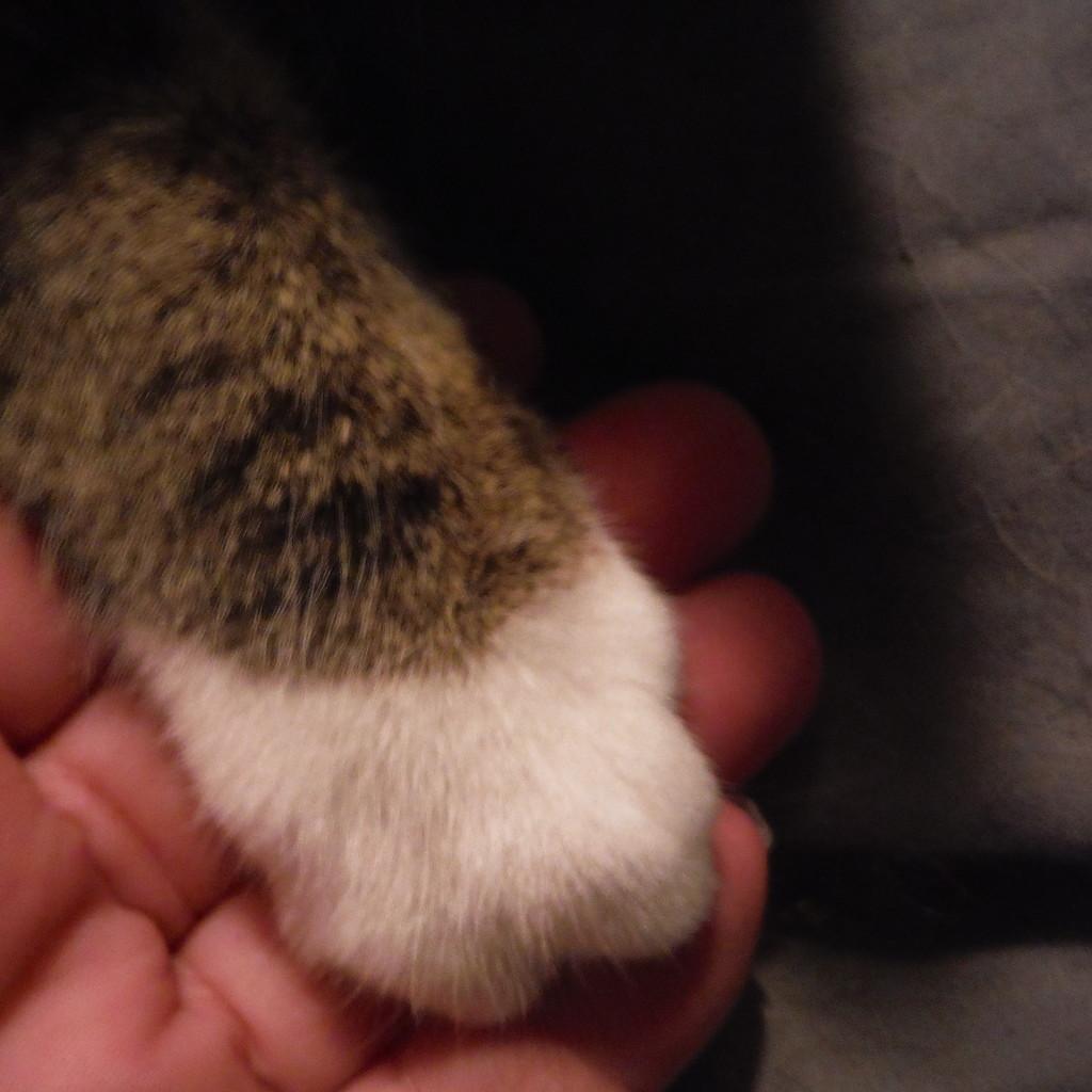 Swap/Paws by spanishliz