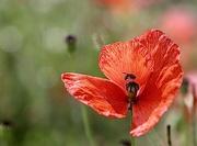 13th Jul 2020 - Poppy & Bug