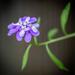 Purple Petals  by marylandgirl58