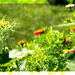 Impressionist view of the garden
