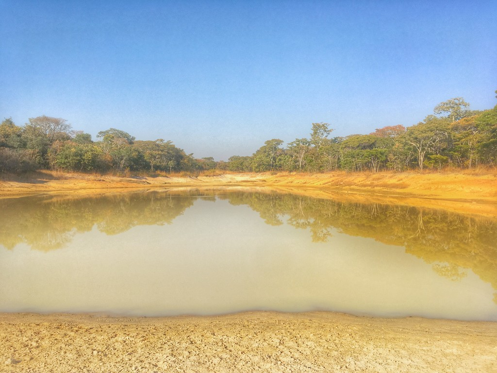Python 🐍 Pond by zambianlass