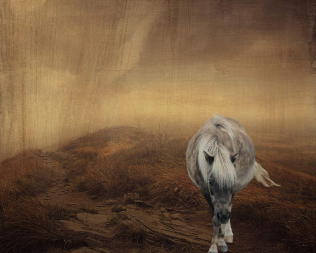 Lonely Horse on the Plains by not_left_handed