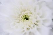 14th Jul 2020 - White & Soft
