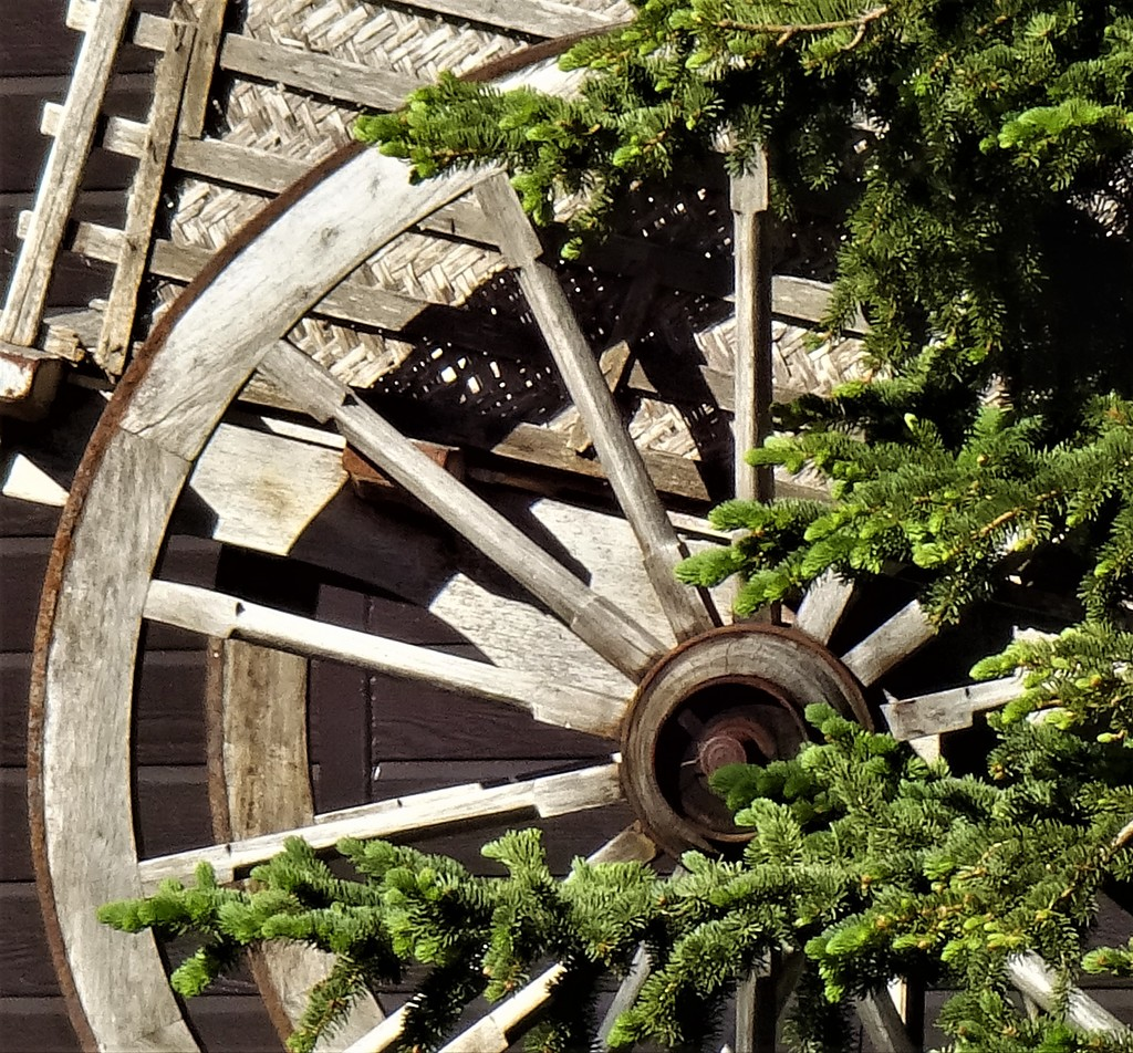 wagon wheel by dmdfday