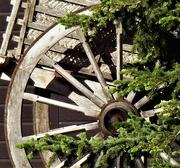 6th Jul 2020 - wagon wheel