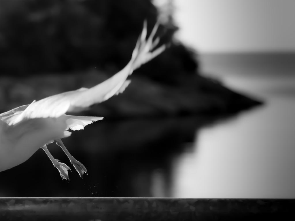 gotta fly! by northy