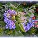 Mahonia berries by gijsje