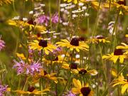 14th Jul 2020 - flower patch