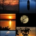 silhouettes  by amyk