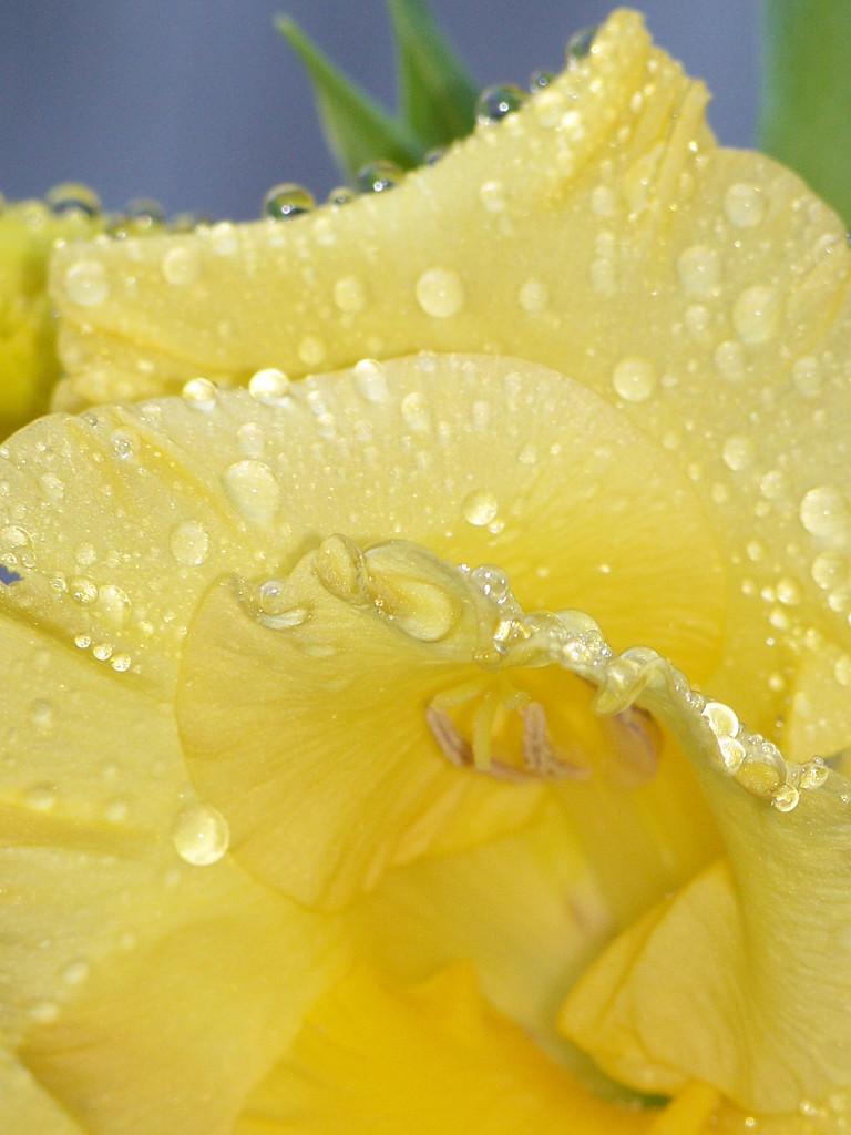 Wet edges.... by marlboromaam