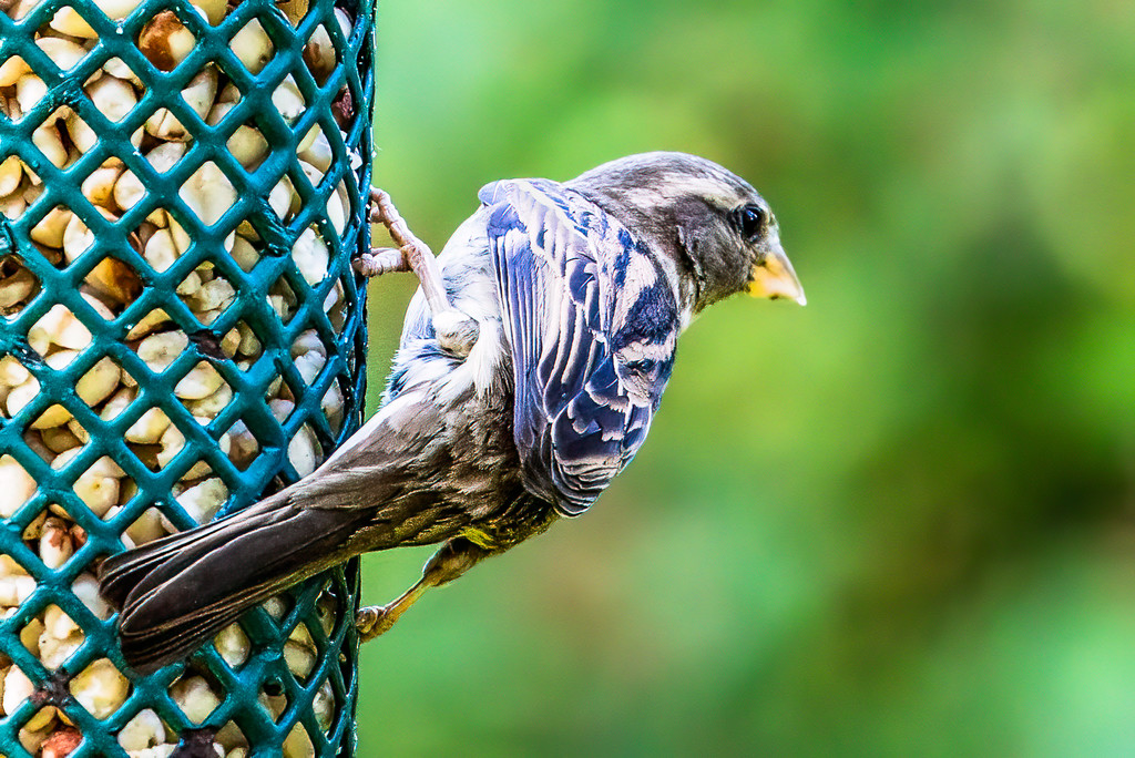 A Blue Mystery Bird Came By by jyokota