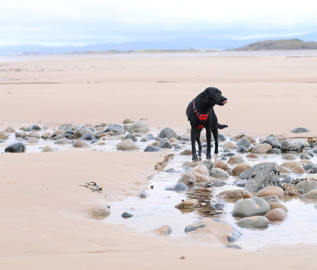 An Empty Beach by motherjane