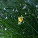 Snowdrops and daffodill