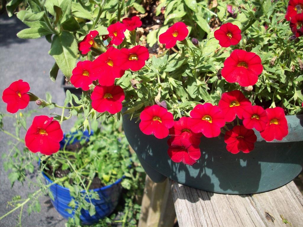 A taste of Summer by stillmoments33