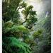 Misty New Zealand Bush ... by julzmaioro