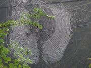 3rd Jul 2020 - Spider Web
