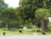 17th Jul 2020 - Next Door Neighbours' Lawn Mowing Team