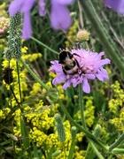 18th Jul 2020 - Bee