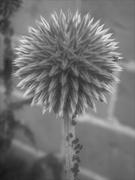 1st Jul 2020 - Aphid Lollipop