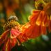 pollen paradise by pistache