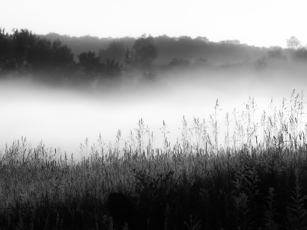 early morning fog by northy