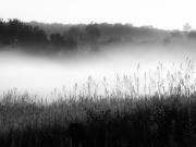 18th Jul 2020 - early morning fog