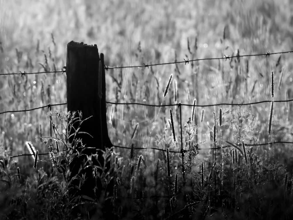 post and grass by northy