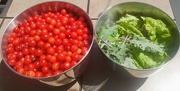 18th Jul 2020 - Garden Produce