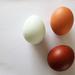 Three hens by etienne