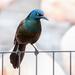 Beautiful bird  by pamknowler