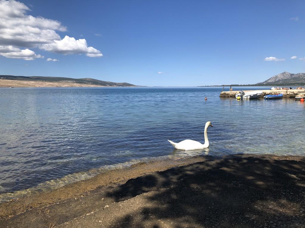 Swan Sea by cherrymartina