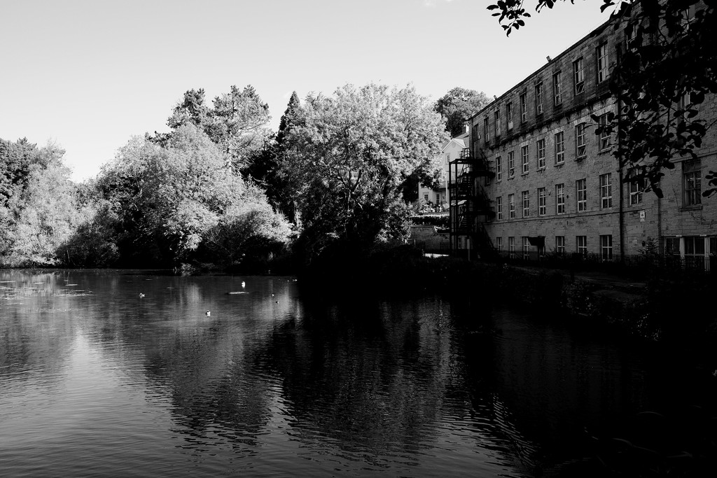 The Mill Pond by allsop