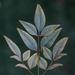 found leaf by peta_m