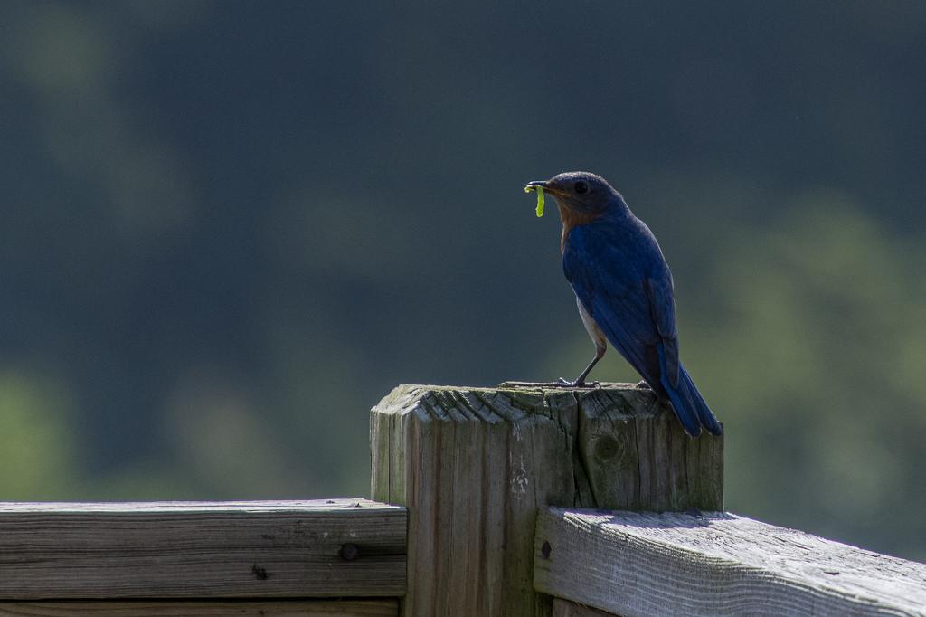 Green Breakfast for a Blue Bird by timerskine