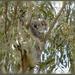 Meet Matilda by koalagardens