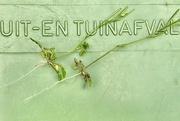 20th Jul 2020 - Grass roots gardening ;)